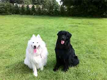 Two dogs sitting  together in a field, tongues hanging out after playing and running