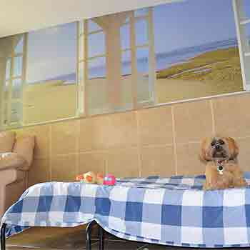 Lhasa Apso dog sitting on his gingham covered full size bed near a full size armchair with a beach scene background and a window with views to the garden