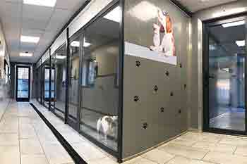 Dog kennels with glass fronts looking over a well lit corridor which leads to the garden
